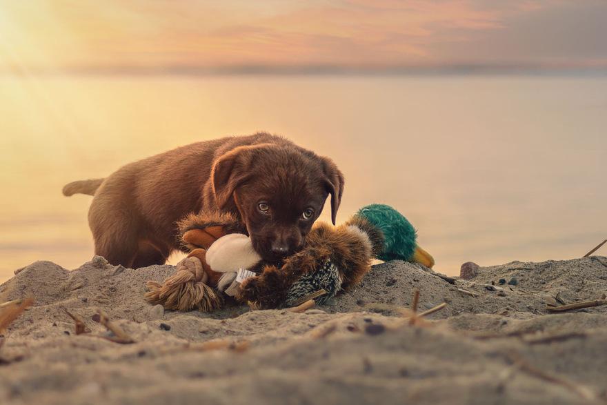 Auf usedom sind auch hunde herzlich willkommen for Urlaub auf juist mit hund